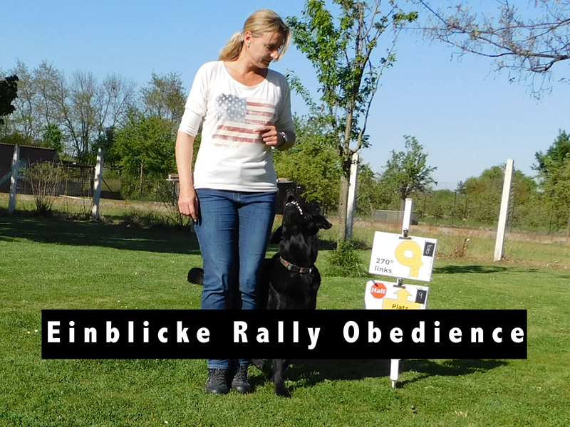 Einblicke Rally Obedience