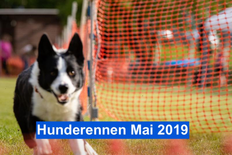 Hunderennen Mai 2019